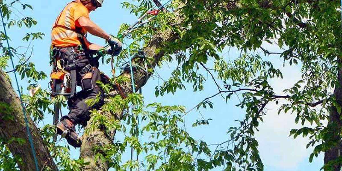 5 Reasons Why You Should Prune Your Tree
