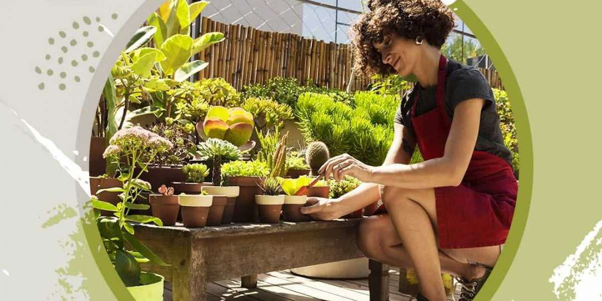 A brief beginner's guide to home gardening