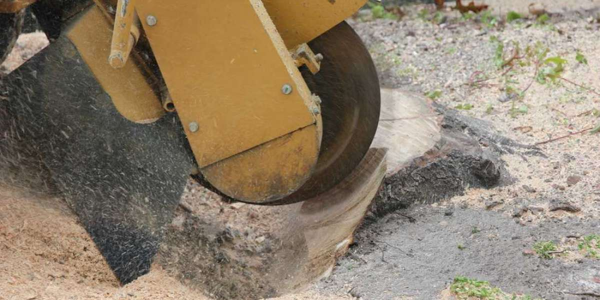 Pointers to be aware before availing tree removal services
