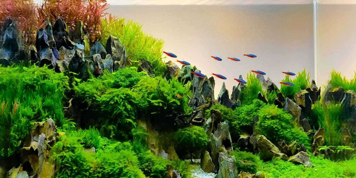 Aquascaping For Beginners - Tips and Tricks
